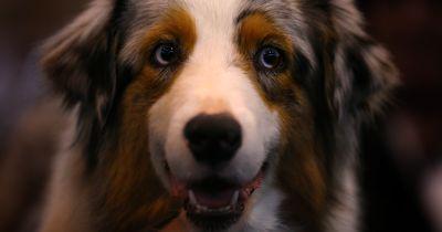 Den Hund baden: Ein echter Kampf für viele Hundebesitzer
