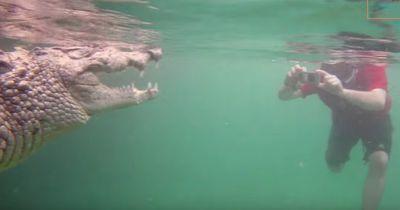 Nur etwas für ganz Harte: Schwimmen mit extrem besonderen Reptilien!
