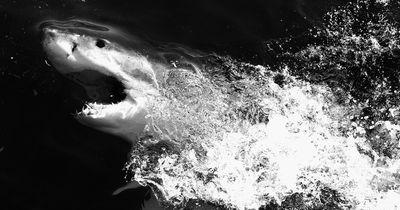 5 Fakten über Haie