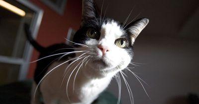 5 Dinge, über die sich jeder Katzenbesitzer schon gewundert hat