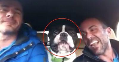 Wenn sein Herrchen singt, macht dieser Hund etwas Witziges...