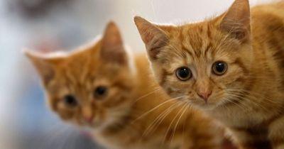 Diese 5 Dinge sollte jeder Katzenbesitzer wissen!