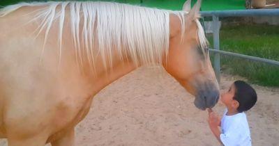 Dieser Junge scheint eine besonderen Draht zu dem Pferd zu haben!