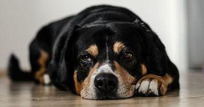 Kaum Menschen wissen, wie schlimm es ist, Hunde angebunden zurückzulassen