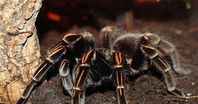 Gänsehaut pur: Danach wirst du noch mehr Angst vor Spinnen haben!