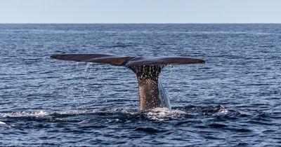 Was passiert, wenn eine Wal-Mutter ihr Baby verliert?