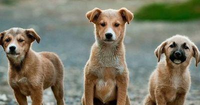 Das waren 2015 die beliebtesten Hunde-Namen