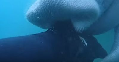 Der Angriff des mysteriösen Seetieres