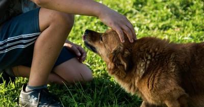 """5 Mal, dass dein Hund dir """"Ich liebe dich"""" sagen wollte..."""