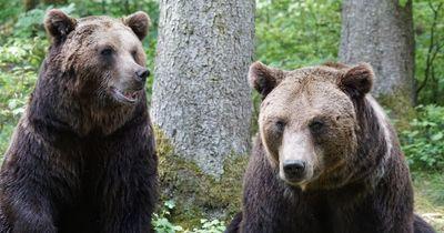 Unzertrennbares Band: Ein echter Star kümmert sich um Bären!