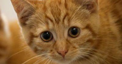 Diese 5 Dinge darf deine Katze nicht essen!