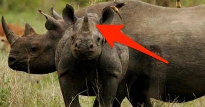 Die kuriosesten Tierfakten
