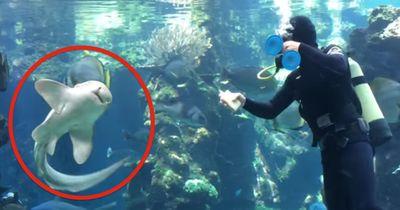 Lebensgefährlicher Job: Er reinigt das Aquarium eines Hais - und dieser hat eine Bitte!