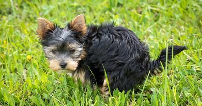 """5 Gründe, warum dein Hund dich beim """"Koten"""" anschaut!"""