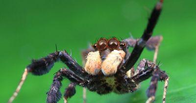 Diese Spinnen solltest du kennen - danach ist deine Angst vor ihnen begründet!