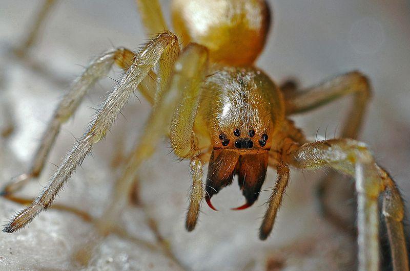 Die Spinne beißt in den Finger