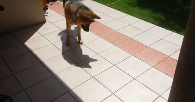 Dieser Schäferhund ist total verstört - doch warum nur?