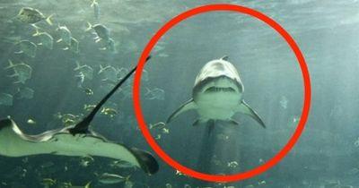Einfach sprachlos: Darum MUSST du dich für Haie einsetzen!