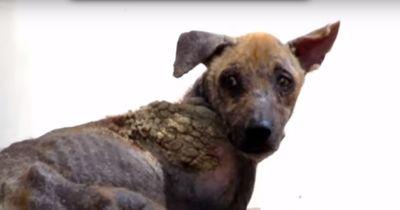Dieser Hund macht eine schockierende Veränderung nach seiner Rettung