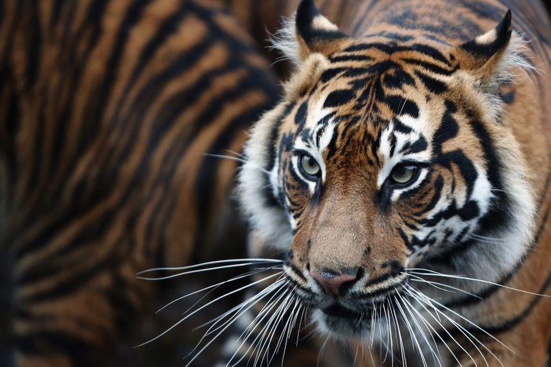 Diese Tierfakten werden dich staunen lassen!