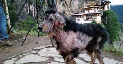 Der Hund von Taktsang