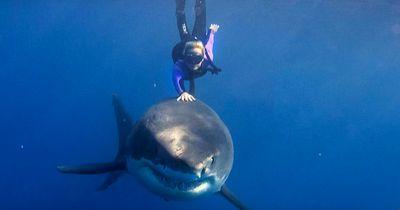 Keine Angst vorm Tod: Diese Frau schwimmt mit einem weißen Hai!