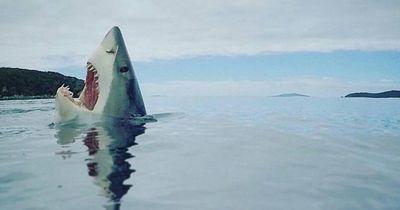 Diese Vorurteile haben die meisten Menschen über Haie!
