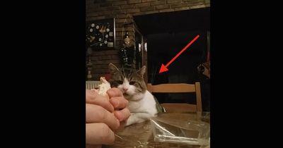 Er wollte einfach nur sein Essen genießen...