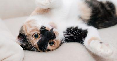 So zeigt dir deine Katze, dass sie dich liebt!