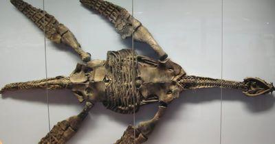 15 unglaubliche Tiefsee-Kreaturen
