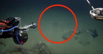 Tiefseeforscher fanden ein Tier