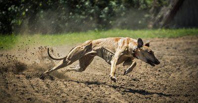 WELTREKORD: Der schnellste Hund dieser Welt!