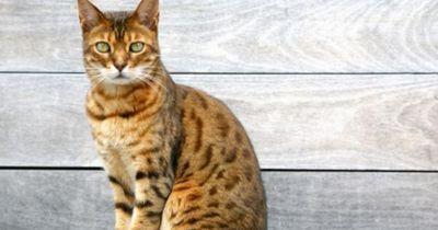 Wenn du DAS tust, wird deine Katze richtig alt!