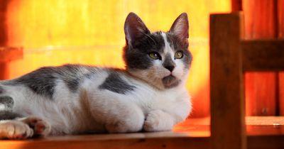 8 Anzeichen, dass deine Katze Zuhause der Boss ist!