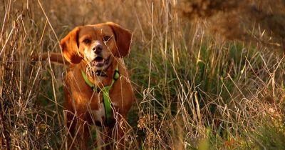Dieser Hund ist der Traum eines jeden Fotografen!