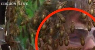 Diese Dschungel-Prüfung gab es im deutschen TV noch nie