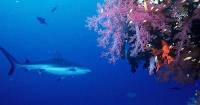 Sie dachten, sie wären vor dem weißen Hai in Sicherheit