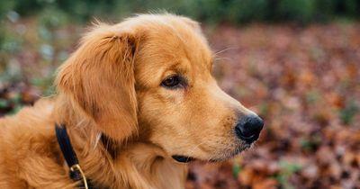 Einen Hund als Haustier - ja oder nein?