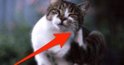 ACHTUNG: Wenn sich deine Katze HIER kratzt, ist sie krank!