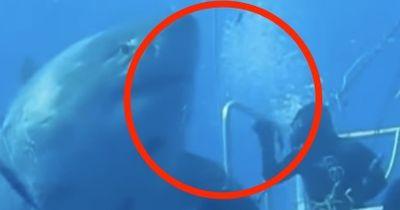 Sie können nicht glauben, wie groß dieser Hai ist!