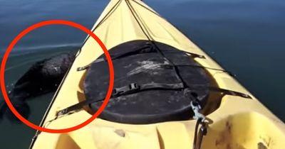Währen dem Kajakfahren tauchte dieses Tier neben ihnen auf