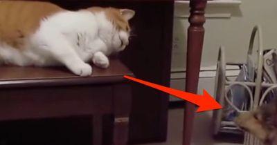 Und plötzlich waren sie da: Katzen treffen auf Welpen!
