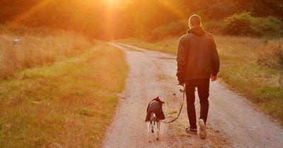 6 Dinge, die sich ändern, wenn du einen Hund hast!
