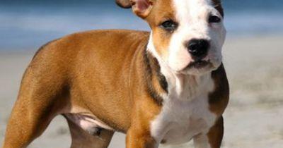 Vorurteile gegenüber bestimmten Hunderassen - hast du sie auch?