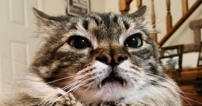 Verrückte Fakten über Katzen