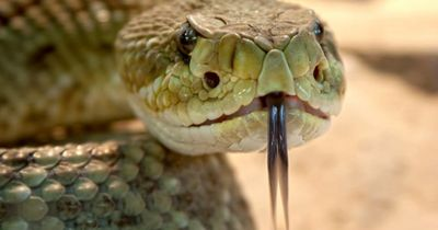 5 Dinge, die du NICHT über Giftschlangen wusstest!