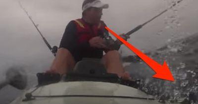 Dieses Tier zeigt dem Kajak-Fahrer wer der wahre Chef im Meer ist