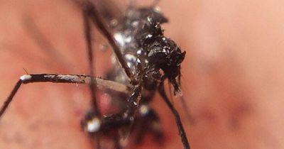 Die Welt im Notstand wegen DIESER Mücke