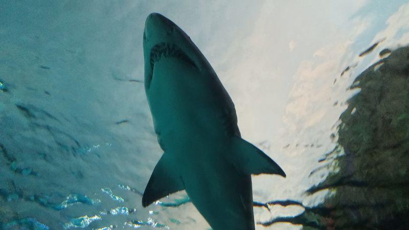 Dieser Mann befreit einen Hai von einem Angelhaken!
