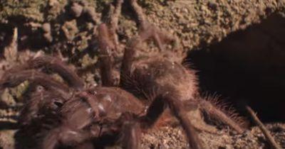 Diese Kinder jagen die GRÖSSTE Spinne der Welt!